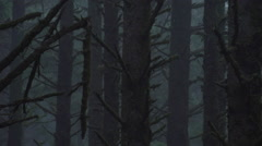 Forest Foliage: Broken Tree Branch Swaying in Foggy Light - stock footage