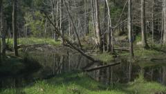 Summer swamp in the forest. Muskoka, Ontario. Stock Footage