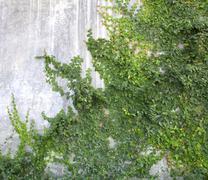 The Green Creeper Stock Photos