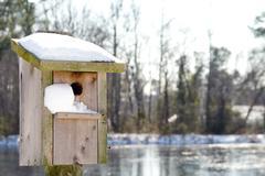 A Birdhouse in the Snow Stock Photos
