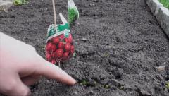 Pointing at germinating radish in home garden Stock Footage