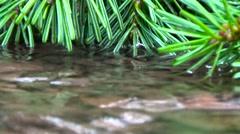 Stock Video Footage of Stream in the forest on the background of trees.