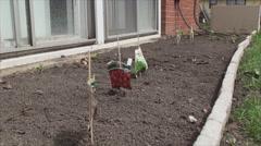 Small garden next to house windows Stock Footage
