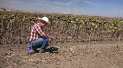 Farmer inspecting seed production Stock Footage