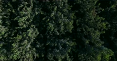 4K top view of the forest Stock Footage