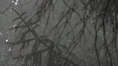 Stock Video Footage of Forest Foliage: Foggy, Wet, Eerie, Sound!