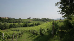 Italian Vineyard in the Prosecco County 01 Stock Footage