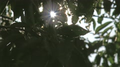 Ambient sunlight shimmering through leaves 1 Stock Footage