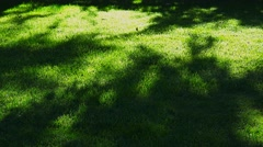 moody atmospheric shadows grass - stock footage