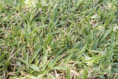 Garden uncut lawn in summer - stock photo