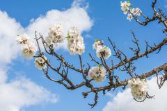 Stock Photo of Spring Blossom