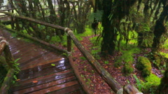 Wooden bridge with moss in natural park under rain Stock Footage
