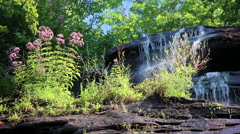 purple wildflowers waterfall 1 - stock footage