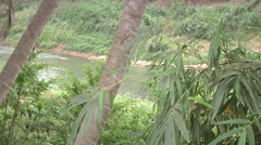 Palms near the river in Luang Prabang, Laos Stock Footage