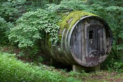 Very rare like Dionysus residential barrel old in a wild forest Stock Photos