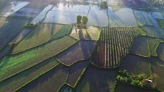 Rice terraces in Indonesia, Bali. Early morning Sun rise view and fog Stock Footage