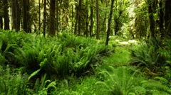 Forest floor in washington state Stock Footage