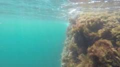 World under water Stock Footage
