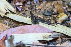 Beautiful Butterfly - stock photo