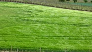Stock Video Footage of Spring green field in the wind