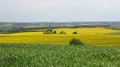 Green and yellow fields with windmills on the horizon Stock Footage