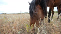 Horse eating grass on the field at summer time Stock Footage