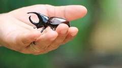 Leisure beetle as a pet Stock Footage
