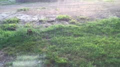 Heavy rain downpour in summer timelapse Stock Footage
