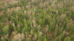 RUSSIA. Surgut - 2014: Aerial view of the forest landscape Stock Footage