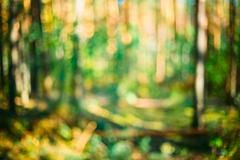 Abstract Blurred Bokeh Background With Summer Forest Woods Stock Photos