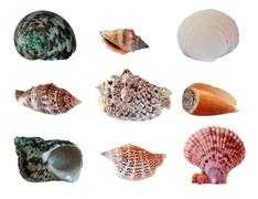 Set seashells Stock Photos