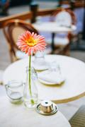 Flower Gerbera Daisy In Bottle Vase Stand On Table Cafe Outdoor - stock photo