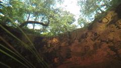 Underwater camera looking at trees Stock Footage