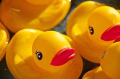 Rubber Ducky - stock photo