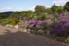 Kirstenbosch Gardens - stock photo