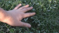 Touching frosty leaf grass with bare hand Stock Footage