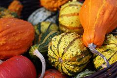 Pumpkins still-life with natural background - stock photo