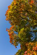 colored canopy in autumn - stock photo