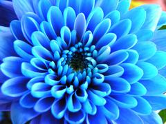 Blue flower - stock photo