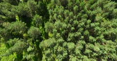 4K - Panorama of the forest Stock Footage