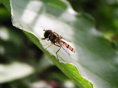 Fly on the leaf - stock photo