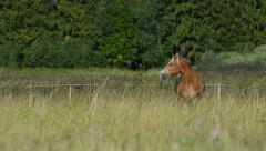 Grazing horse Stock Footage