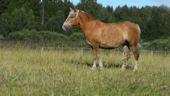 Horse standing in the field Stock Footage