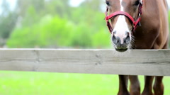 Foal watching Stock Footage