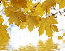 Autumn leafs above the water - stock photo