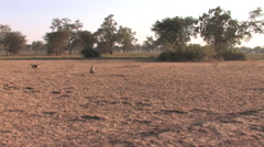 Landscape of the South Luangwa National Park Stock Footage