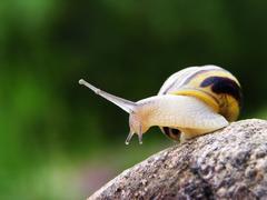 Snail on the stone Kuvituskuvat