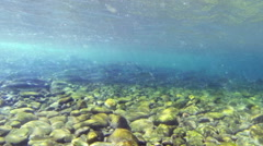 Salmon, Fish, River, Spawn, Pacific Northwest, Underwater - stock footage