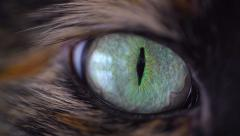 Cat Eye Extreme Close Up - Macro - stock footage