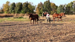 Farmer makes a horse Stock Footage